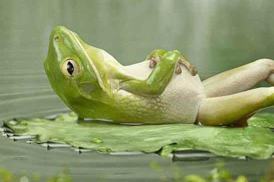 contented froggy