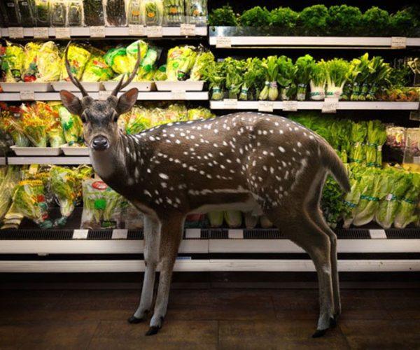 deer in store