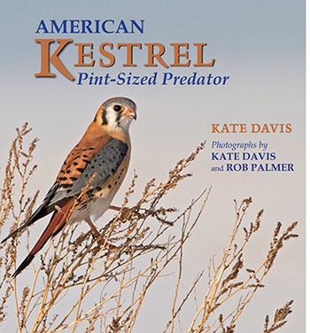 American Kestrel: Pint-sized Predator by Kate Davis, Photographs by Kate Davis and Rob Palmer